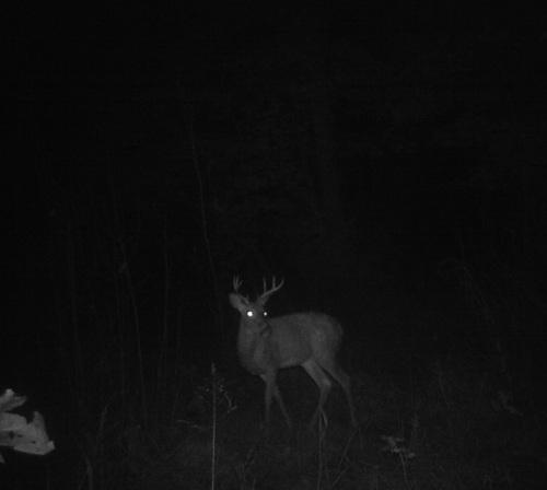 deer game camera 1