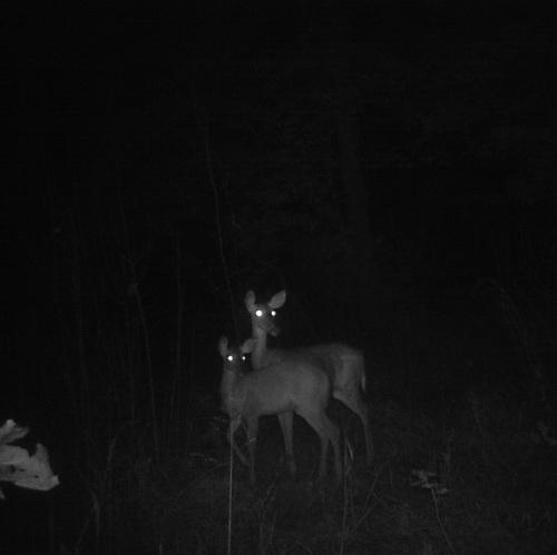 deer game camera 2