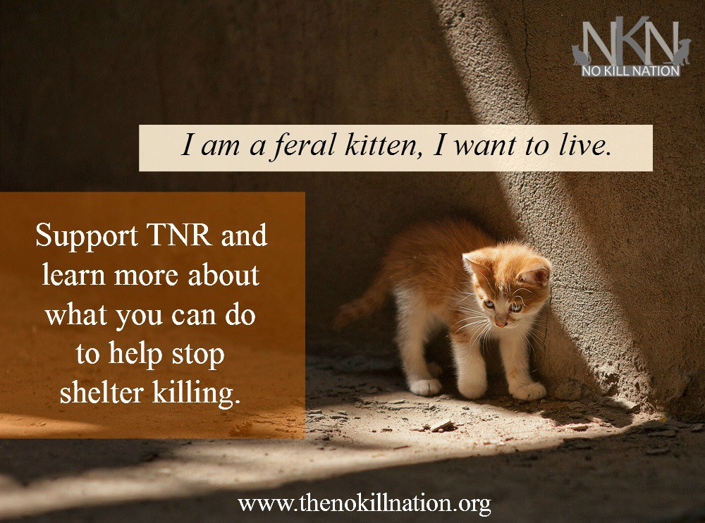feral kitten no kill manipulative meme natural history