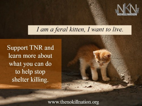 feral kitten no kill