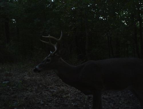 fine buck 2