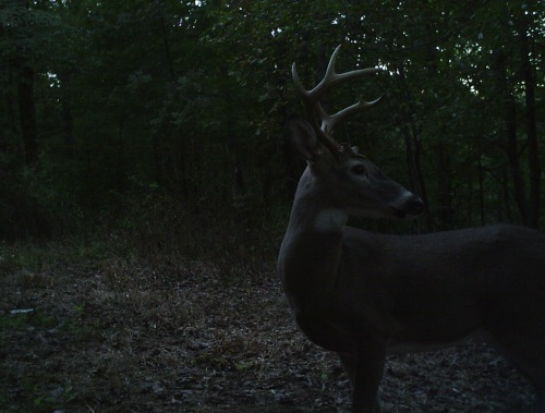 fine buck 3