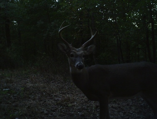 fine buck