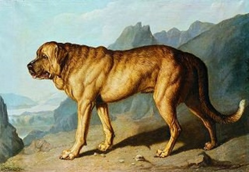 lion alpine mastiff