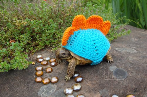 stegosaurus tortoise