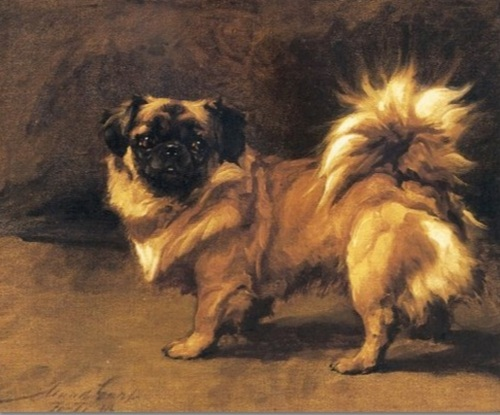 Ti Ti, a pekingese painted by Maud Earl in 1913.