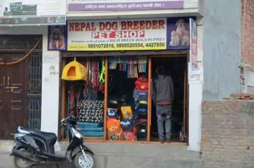nepalese dog shop
