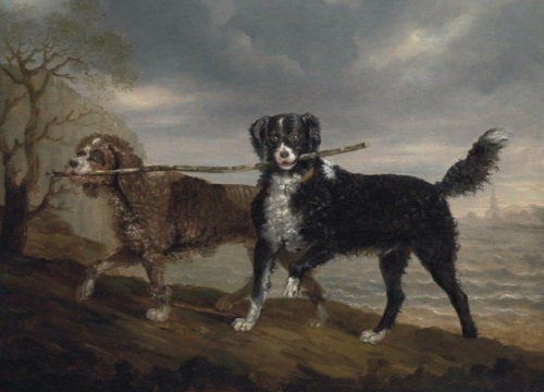 water spaniels ben marshall