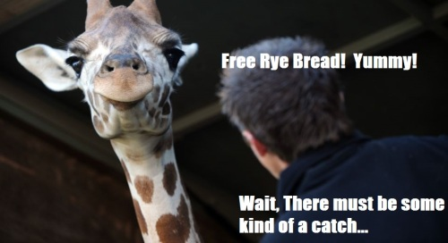 free rye bread!