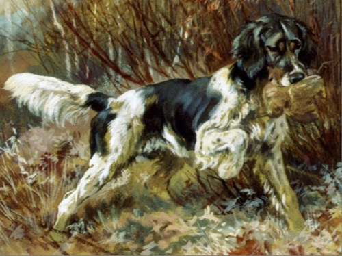 A tricolored retrieving setter, perhaps very similar to the type Benjamin Franklin imported.
