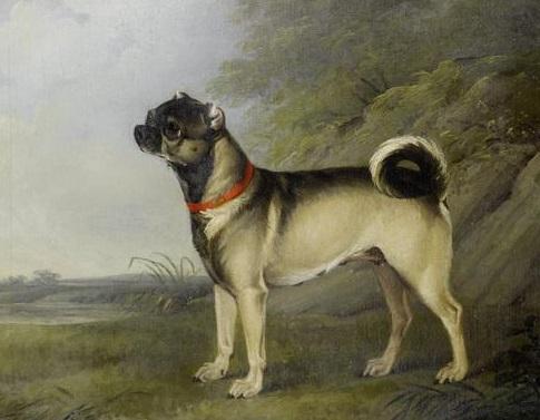 chalon pug 1802