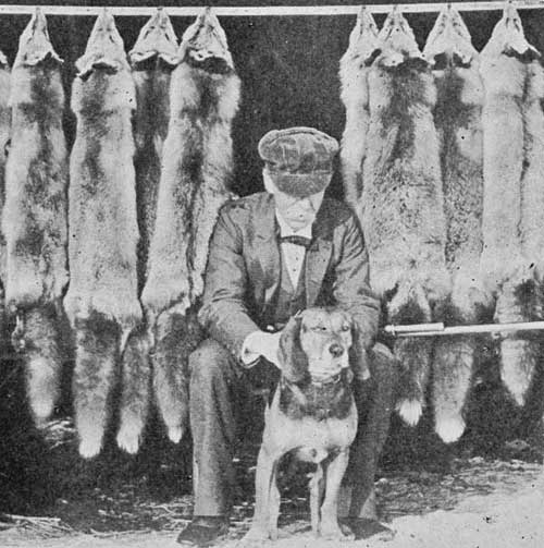 vermont foxhunter and hound