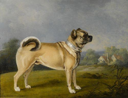 pug 1802