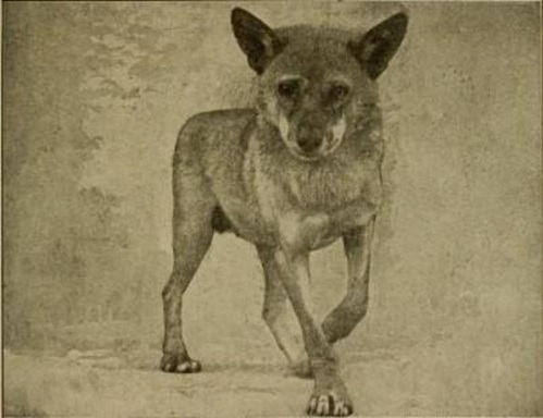 history of the domestication of dogs are By comparing the dna of cats throughout history, the study captures a glimpse of how the animals were changing even before humans started to cart them across the globe, ottoni says.