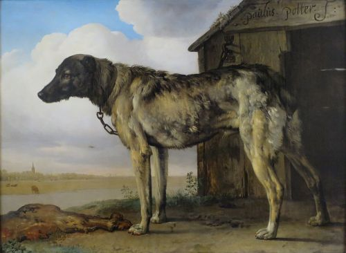 """A Wolf-Hound"" by Paulus Potter. Maybe the same breed as in Ireland, but this dog was Dutch and was alive in the seventeenth century."