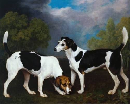 A Couple of Foxhounds, George Stubbs. 1792.