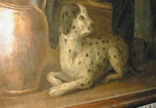 dubrovnik hound