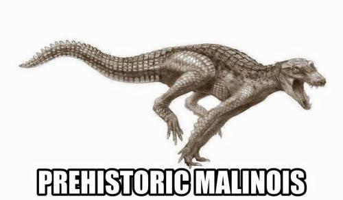 junggarsuchus