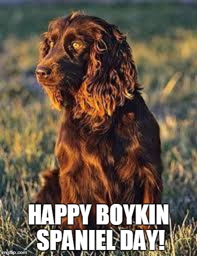 happy boykin meme