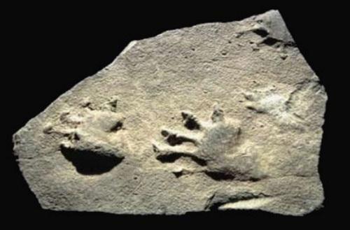 dimetrodon berea