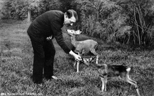 Obersalzberg/Hitler füttert Rehe,um 1936 - Obersalzberg/Hitler feeding deer,abt. 36 -