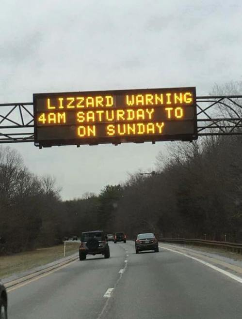lizzard warning
