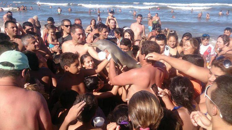 la plata dolphin