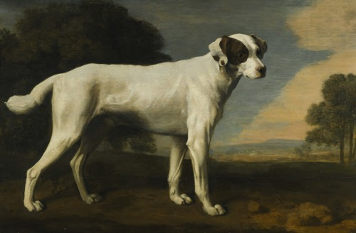 Viscount Gormanston's White Dog