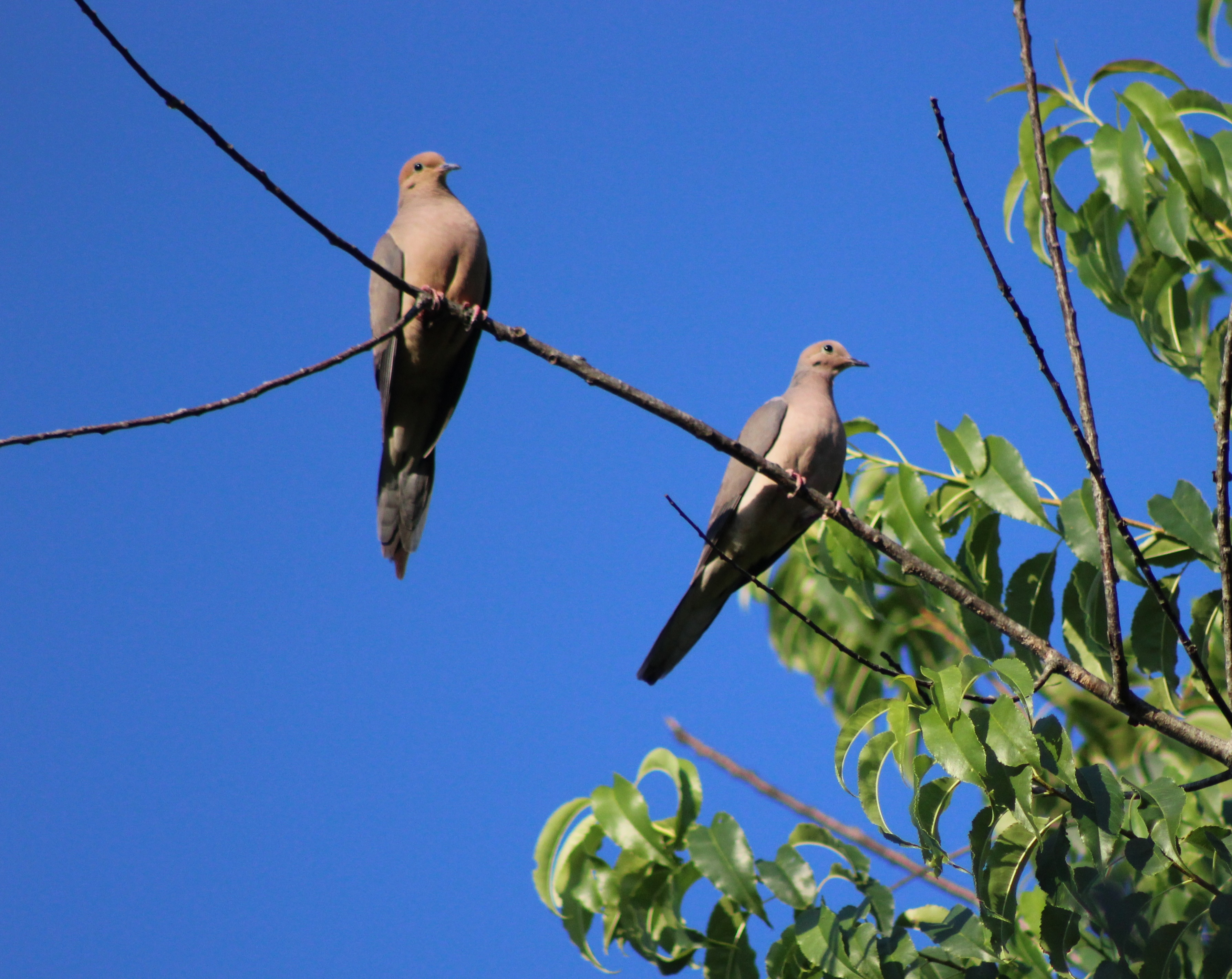 Estos son los 9 pájaros Lamest en el mundo | GQ