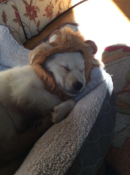 ivy lion