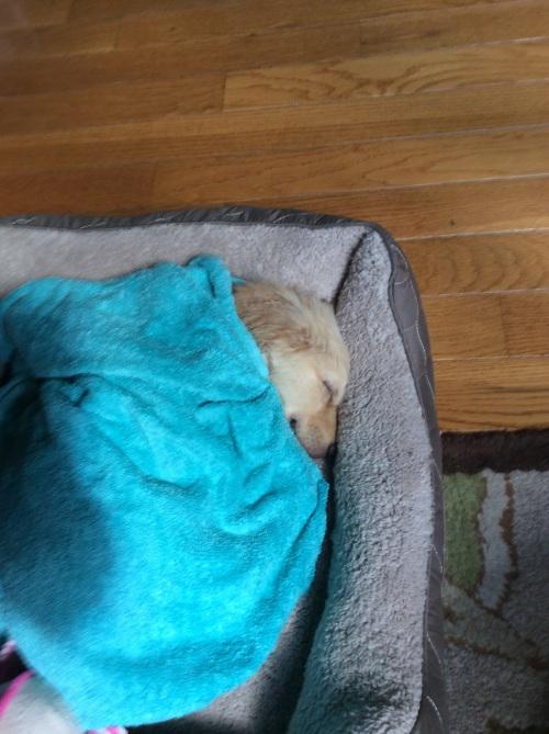 ivy sleeps