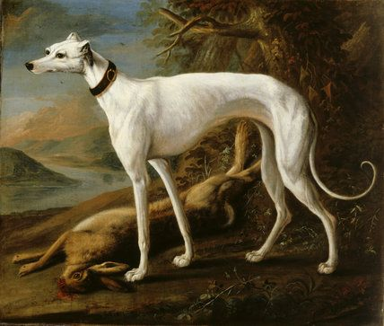 sartorius small greyhound