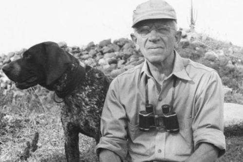 aldo leopold german shorthair
