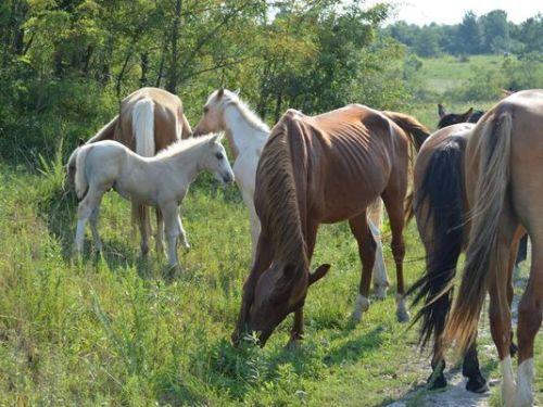 feral horse appalachian