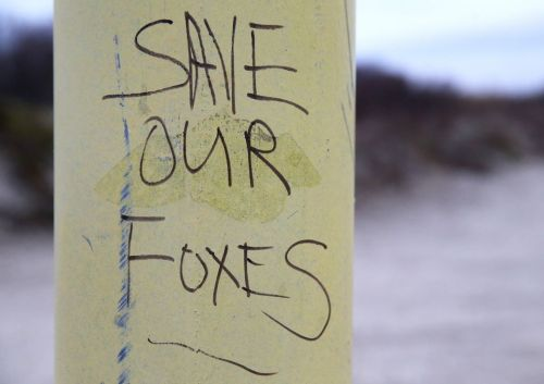save our foxes