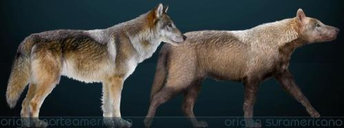 dire wolf bush dog