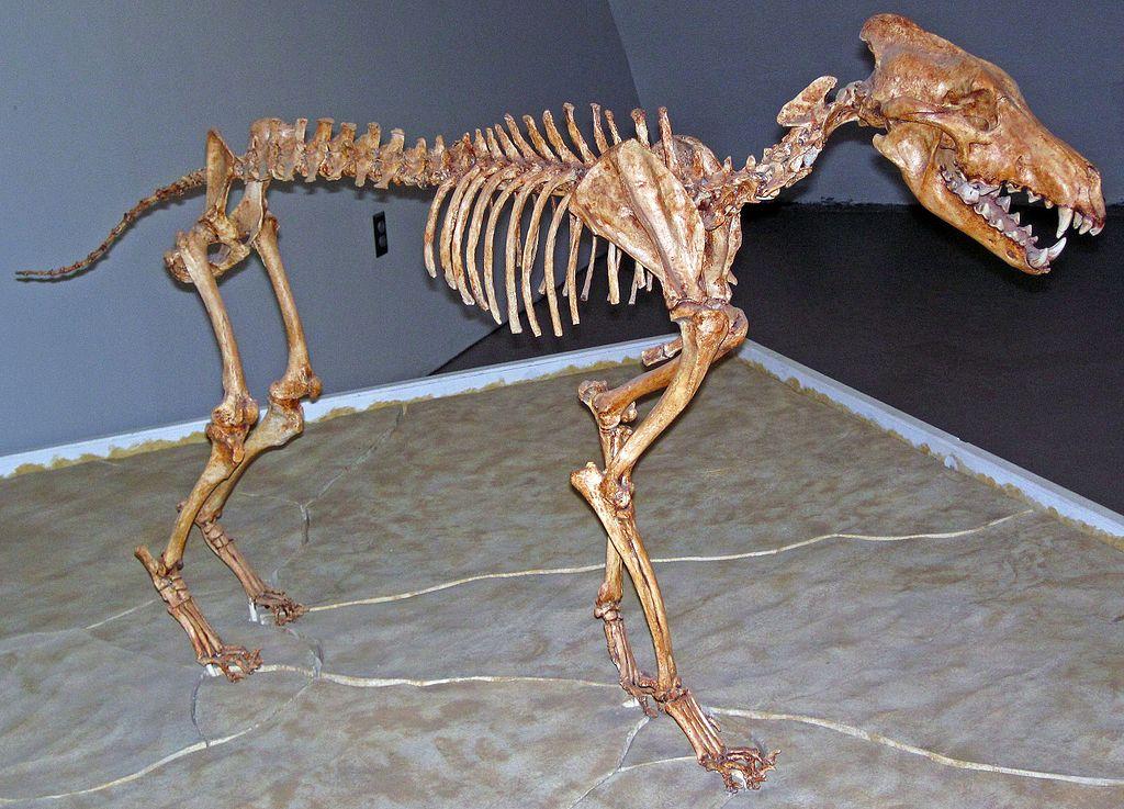 dire wolf skeleton