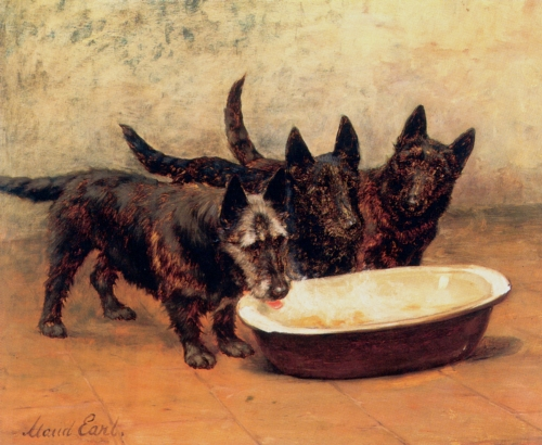 scottish-terriers