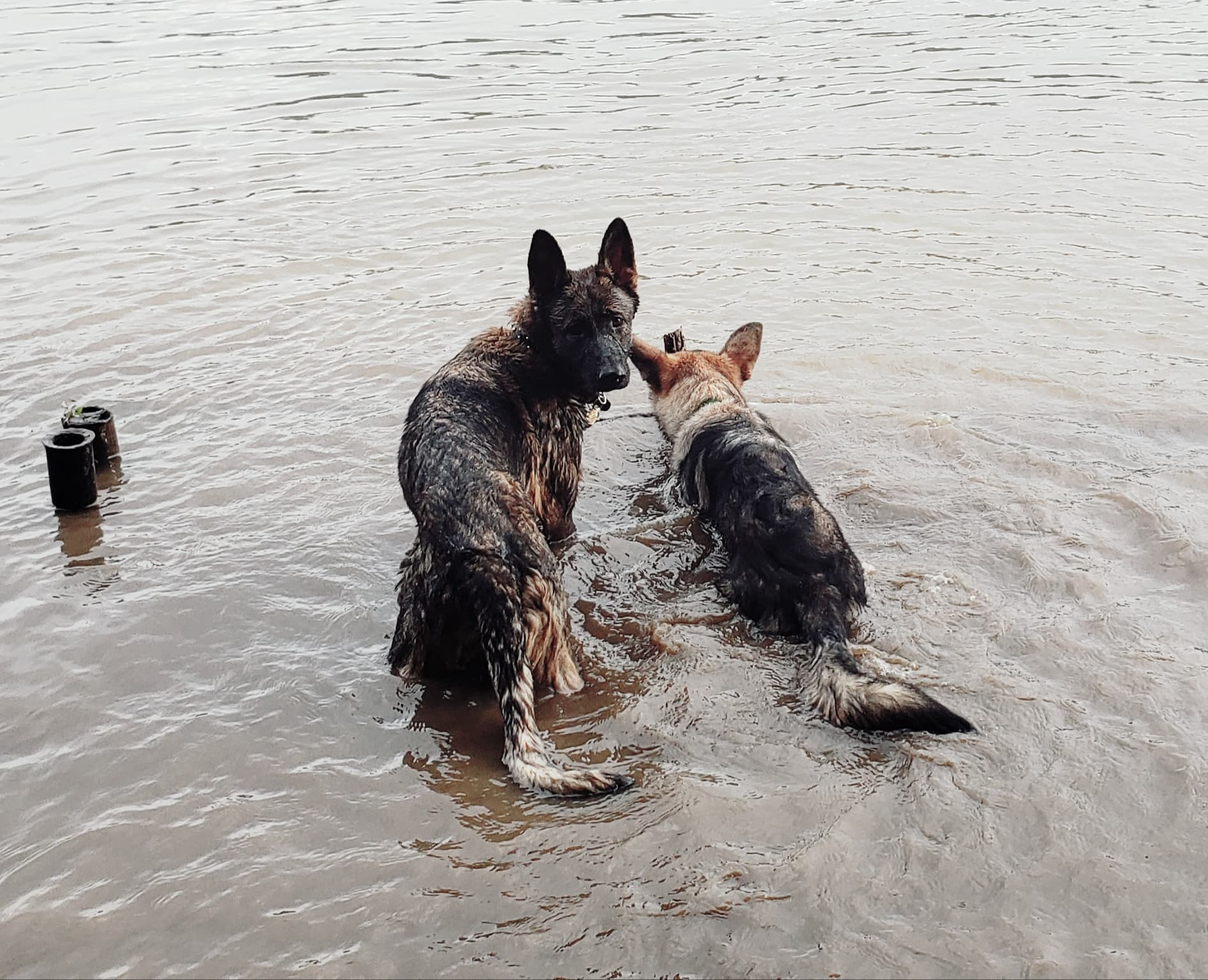 anka and quest in the ohio river