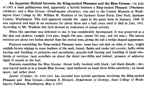 hybrid blue grouse and pheasant