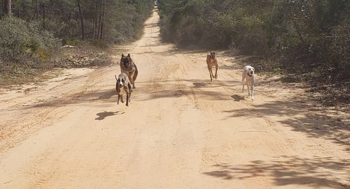 ocala national forest dogs