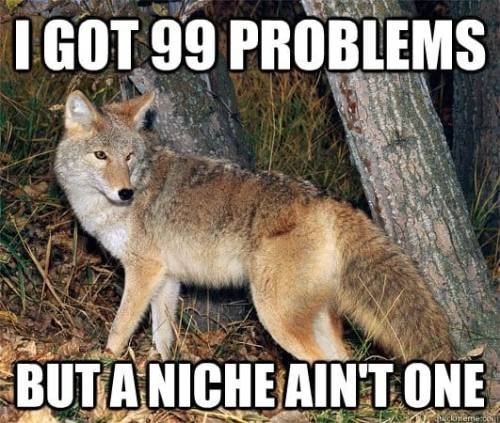 99 problems coyote