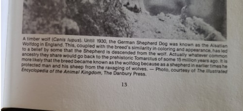 Tomarctus wolf Jane Bennett