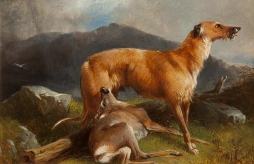 andsdell deerhound
