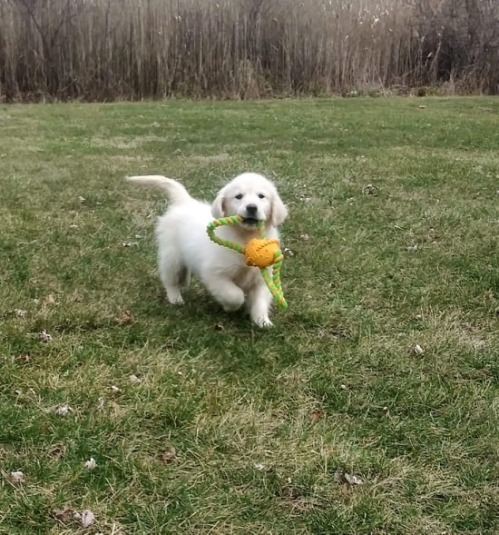 aspen cocky fetch